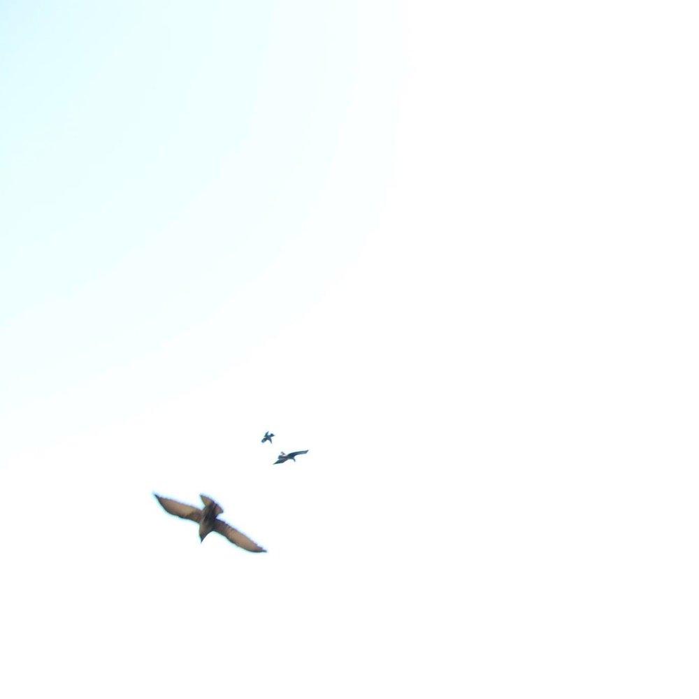 release to soar