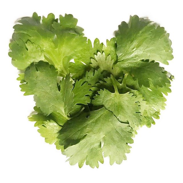 Love it or hate it??💚🙅🏼♀️ ⠀⠀⠀⠀⠀⠀⠀⠀⠀ ⠀⠀⠀⠀⠀⠀⠀⠀⠀ ⠀⠀⠀⠀⠀⠀⠀⠀⠀ Cilantro. Are you one of those people who loves it in your chipotle rice? Or do you think it tastes like some cheap soap from a fast food joint? Well science has found that people who dislike cilantro for its soapy taste share a common group of olfactory-receptor genes—one of which is responsible for detecting chemical compounds known as aldehydes. Cilantro and hand soap contain the same aldehyde...thus, the soapy taste all you weirdo gene-carrying, cilantro-hating people know too well!
