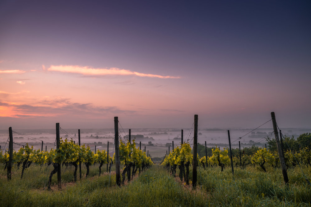 Biodynamic wines - The Night Kitchen is committed to providing one of the most delicious biodynamic wine lists in the region! Not only important for the environment but also for the unsurpassed taste and quality of wines.