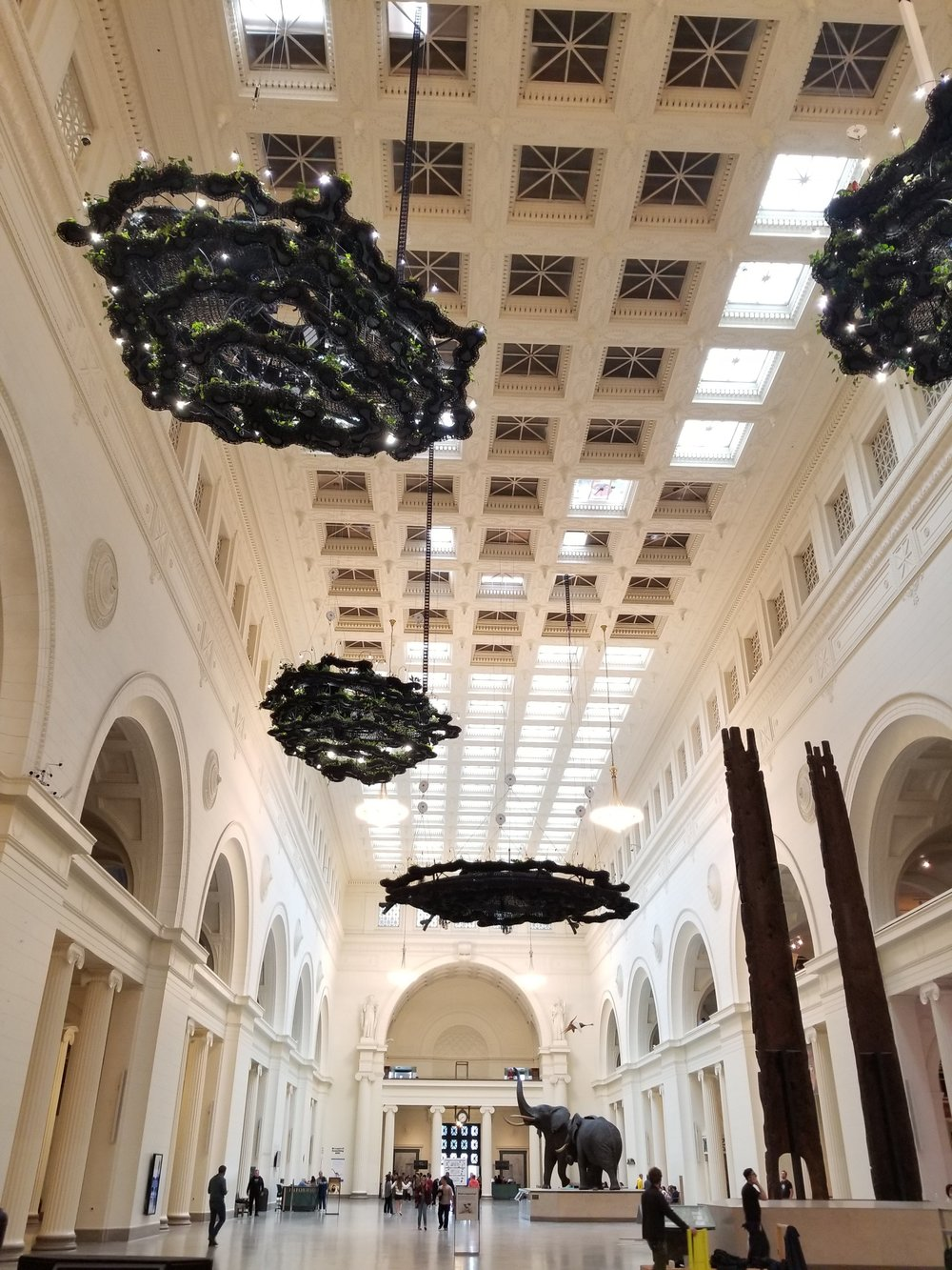 The Field Museum had these incredible living plant chandeliers!