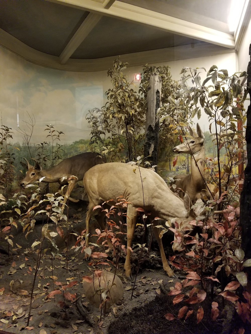 I love to see these diorama exhibits at natural history museums. The realism of them is incredible, a moment frozen still. This one features 17,000 wax leaves cast from unique plaster molds of real leaves.