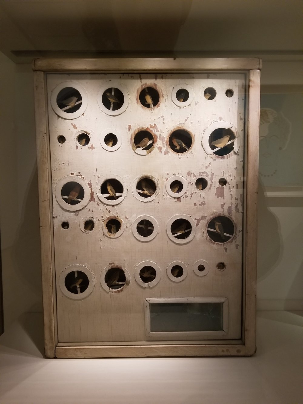 Another Joseph Cornell box. This one with birds.