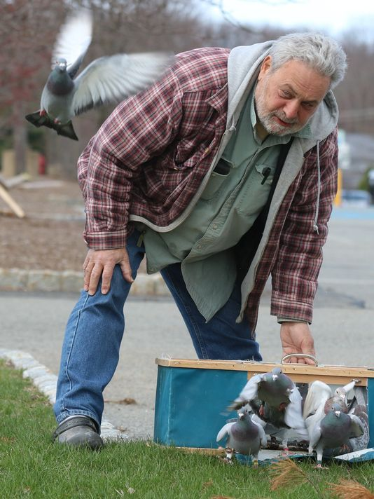 Vincent Torre releases homing pigeons from a parking lot 40 miles from his home.  Photo: Chris Pedota/NorthJersey.com