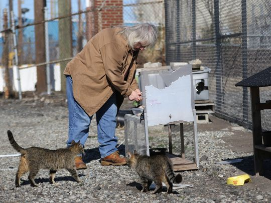 Nilsen prepares food for a cat trap in Kearny. She spends $10,000 annually to feed and trap up to 700 feral cats. Photo: Kevin R. Wexler/NorthJersey.com