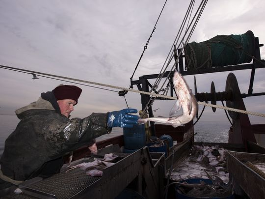 Roy Deal Jr. throws a spiny dogfish into a bucket. The market price for dogfish is 17 cents per pound. From Belford, dogfish are trucked to Maine and processed into fish sticks. (Photo: Michael Karas/Northjersey.com)