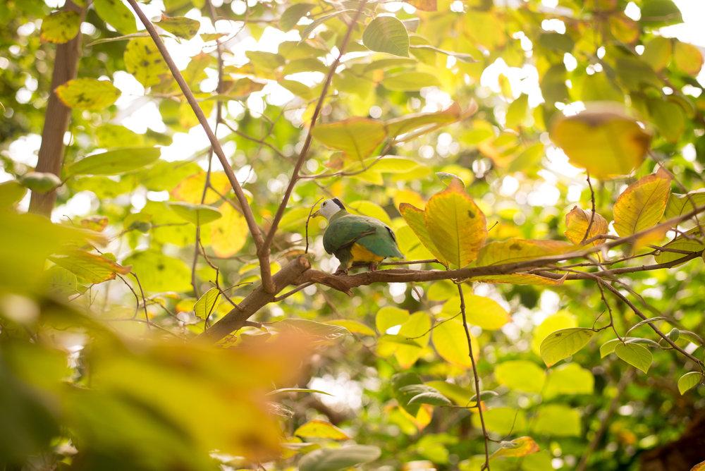 Detroit Zoo Aviary