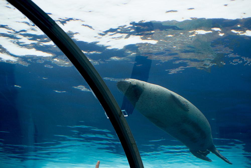 Detroit Zoo Seal