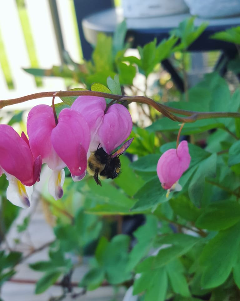 Gardening Through Grief Avery S Garden