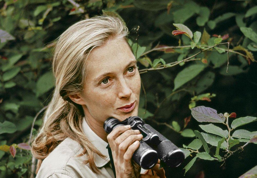 Jane Goodall, in https://www.nationalgeographicbrasil.com/sites/brazil/files/styles/image_1900/public/becoming-jane-binoculars.jpg