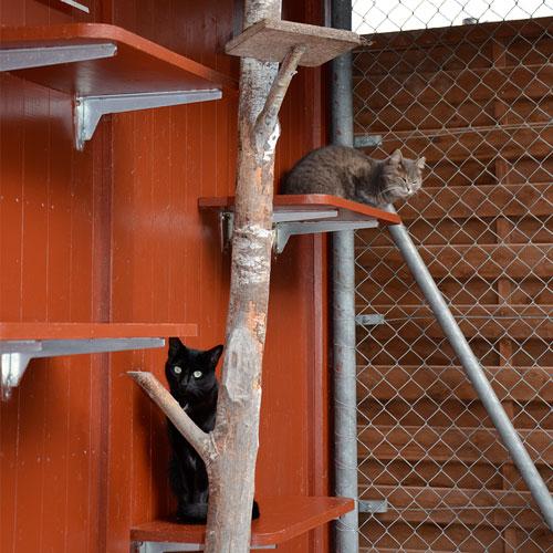 Unser Aussenauslauf ist über Katzentüren jederzeit zugänglich und bietet neben Kletterbäumen auch Liege- und Beobachtungsplattformen auf jeder Höhe. Aber keine Sorge: er ist absolut fluchtsicher.
