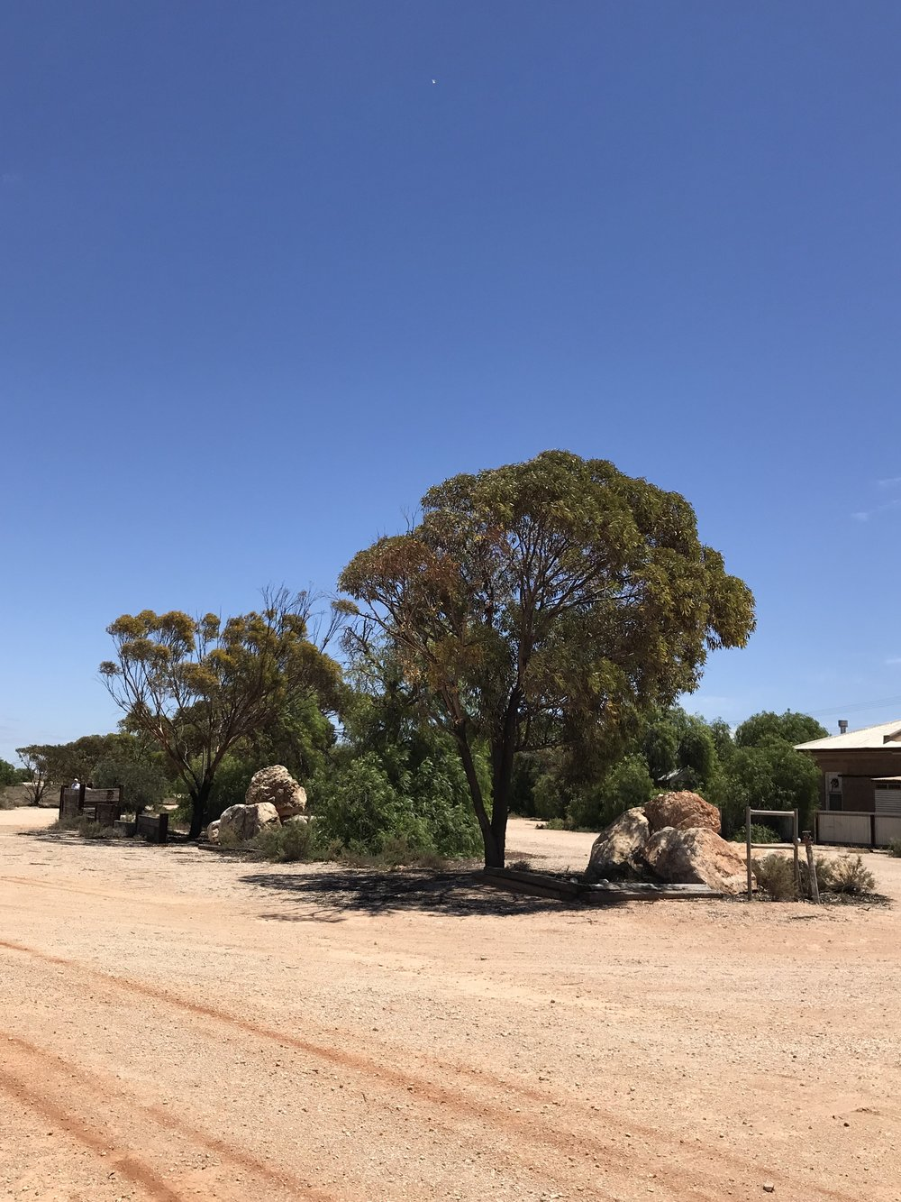 Trees in Cook, Australia