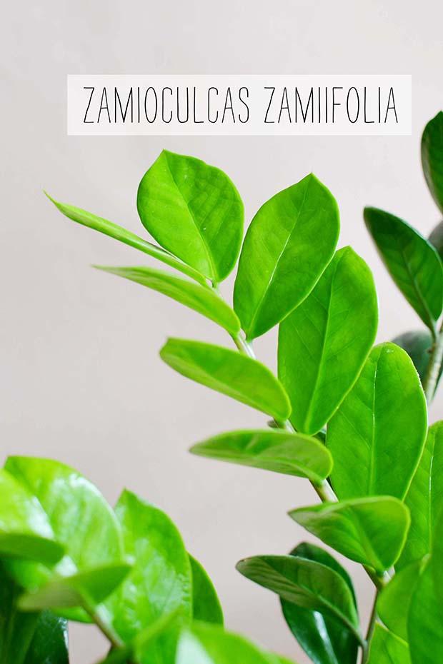 4_liliinroza_blog_rastline