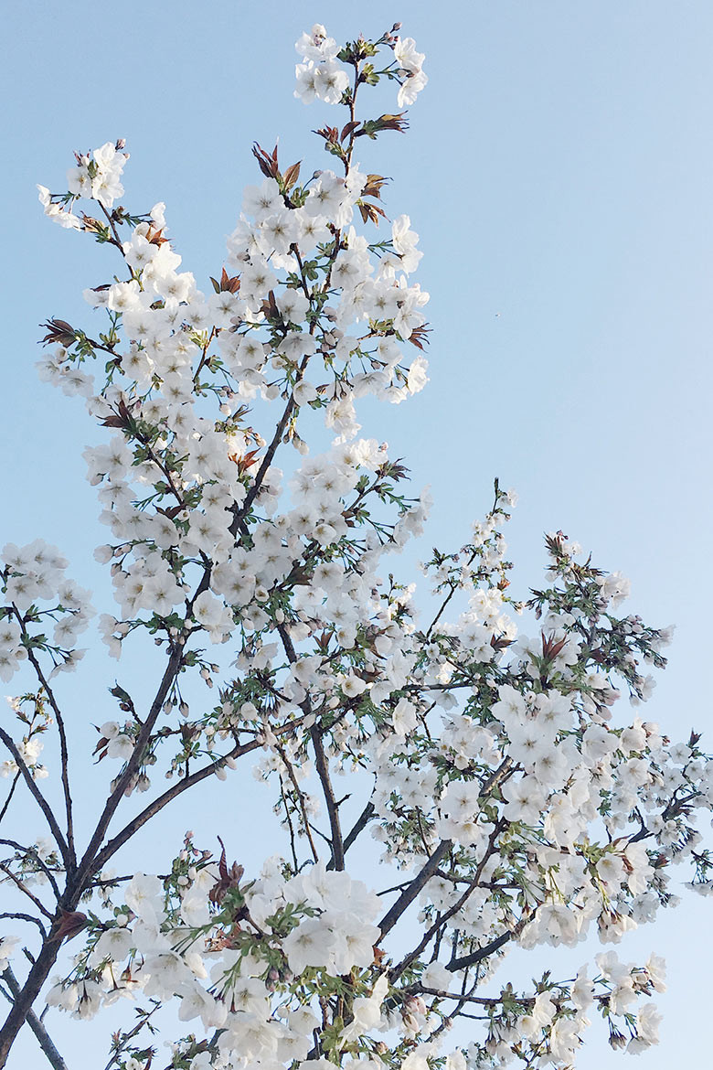 download_wallpaper_blossom_780
