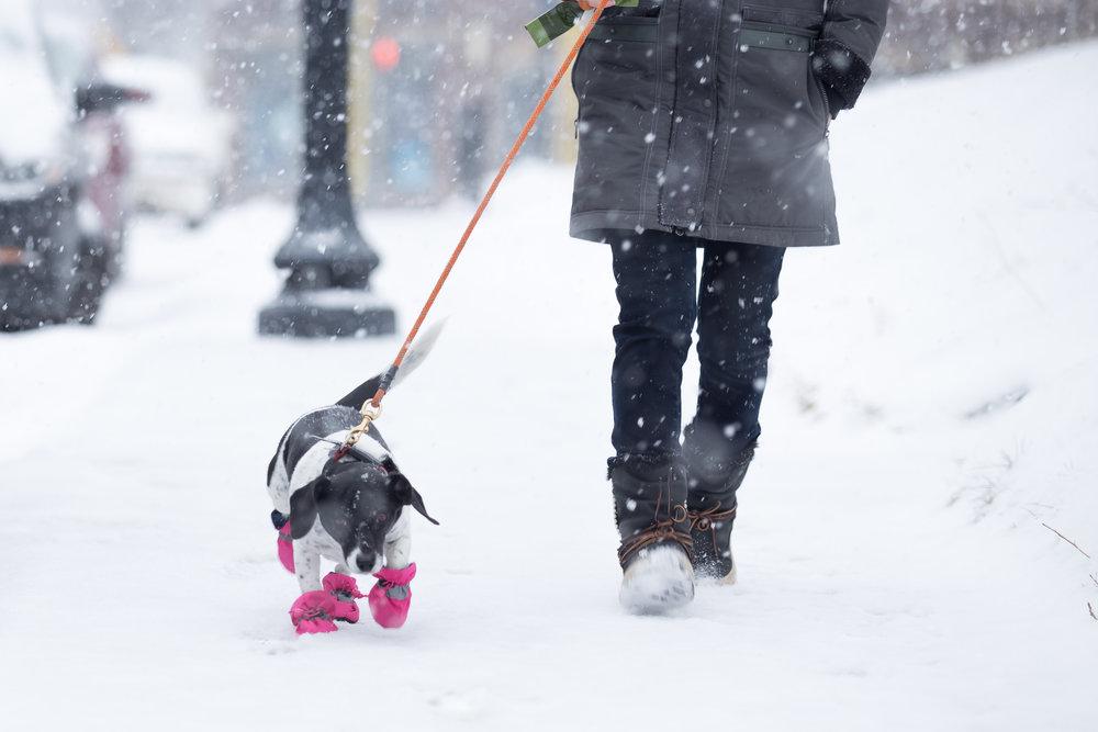 01.14.17 Voilet snowshoes-2.jpg