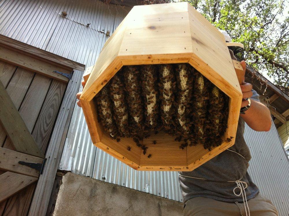 Octagonal Warre Beehive