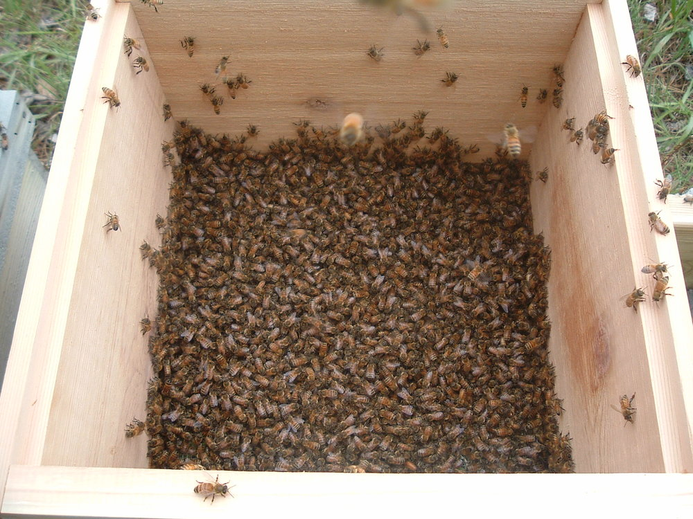 swarm capture 027.JPG
