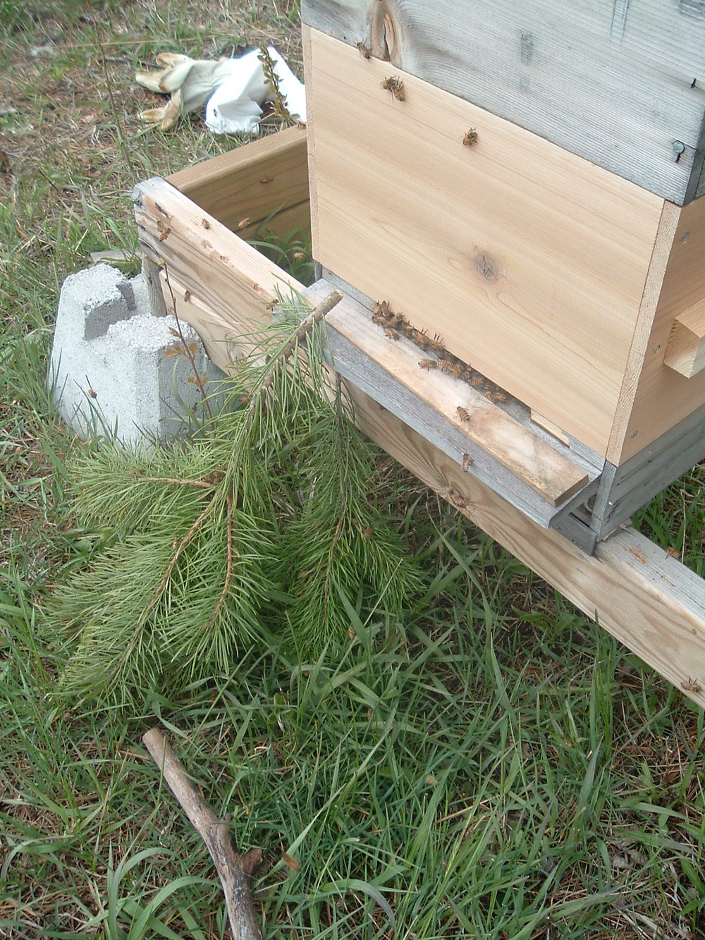swarm capture 044.JPG