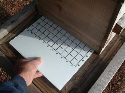 Sticky board 1.JPG