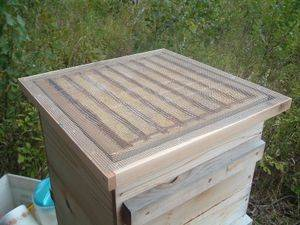 varroa treatment1.JPG