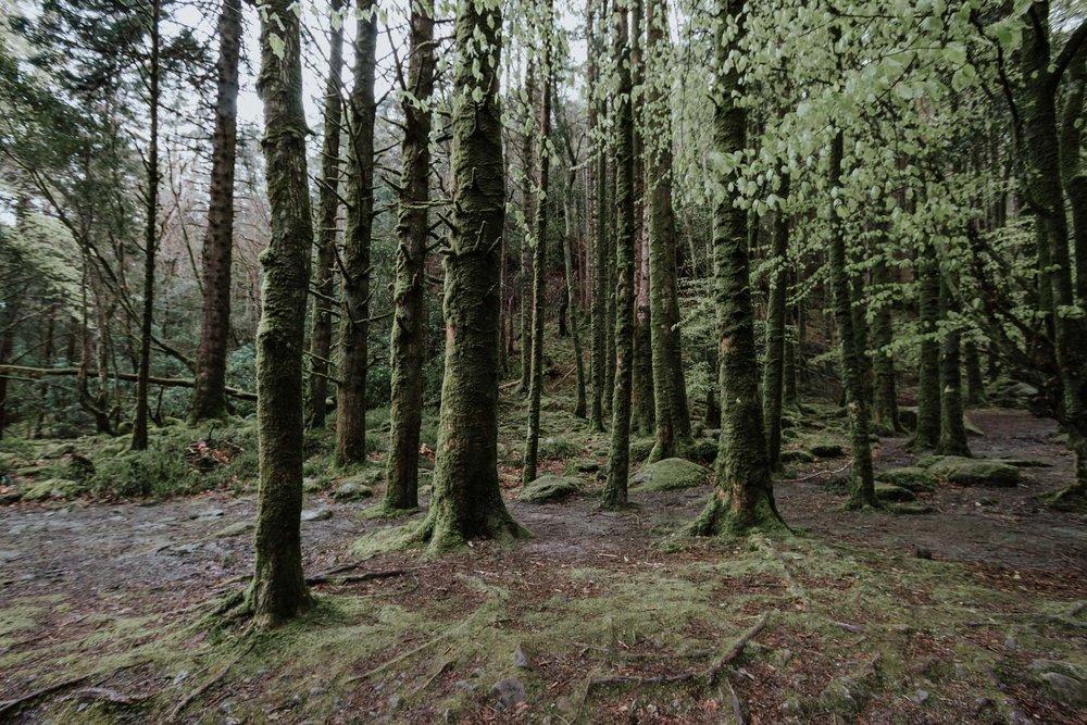 Killarney National Park, Co. Kerry