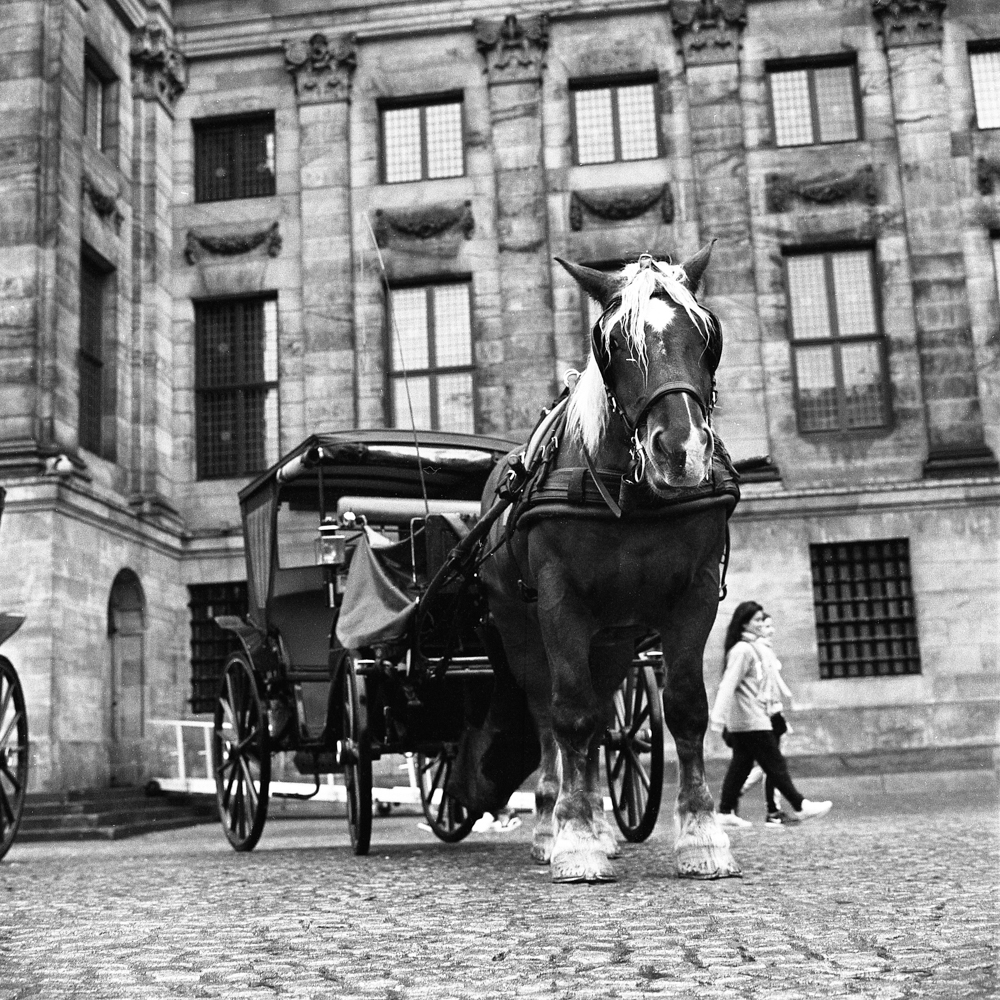 Amsterdam&Bruges_007.jpg