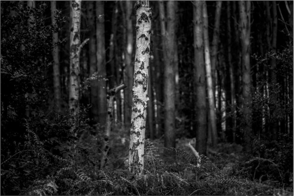 magicwoods_001.jpg