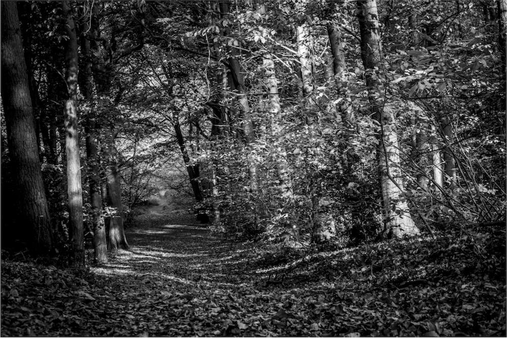 magicwoods_002.jpg