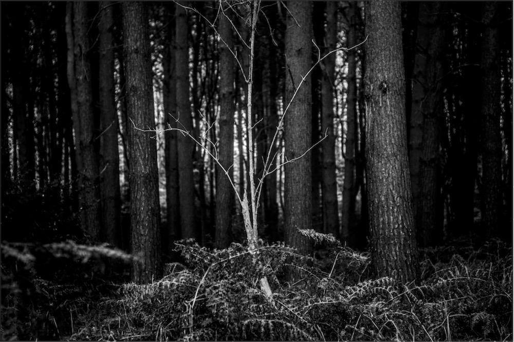 magicwoods_003.jpg