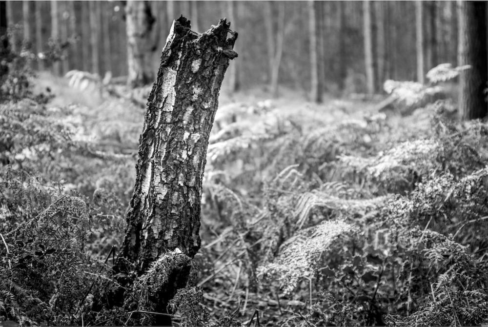 magicwoods_004.jpg