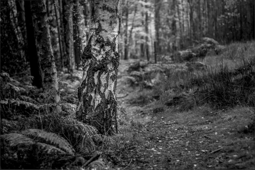 magicwoods_005.jpg
