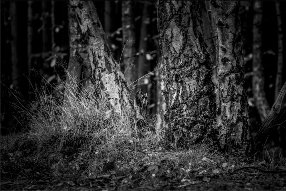 magicwoods_006.jpg
