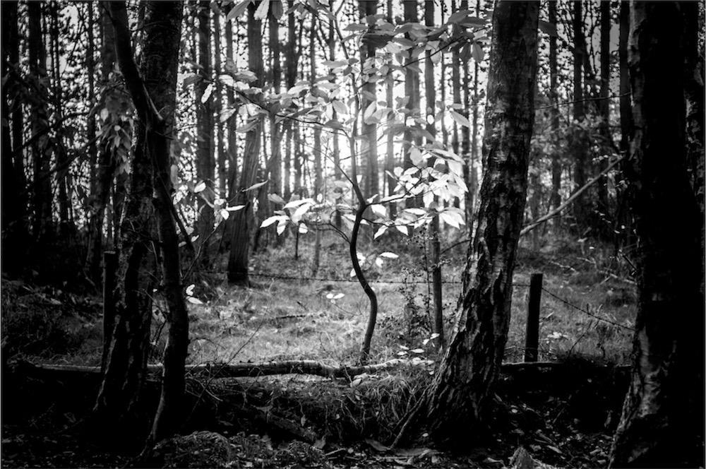 magicwoods_007.jpg