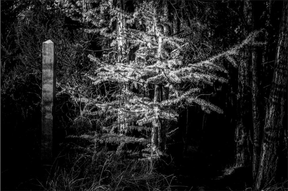 magicwoods_008.jpg