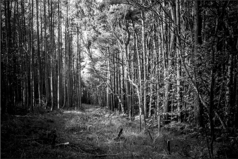 magicwoods_009.jpg