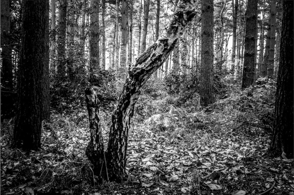 magicwoods_010.jpg