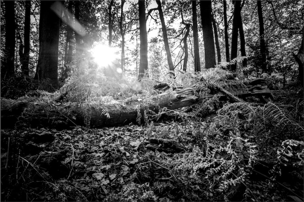 magicwoods_011.jpg