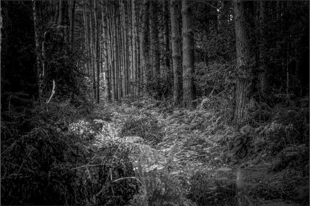 magicwoods_012.jpg