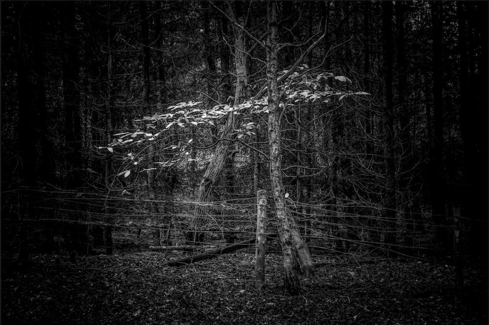 magicwoods_014.jpg