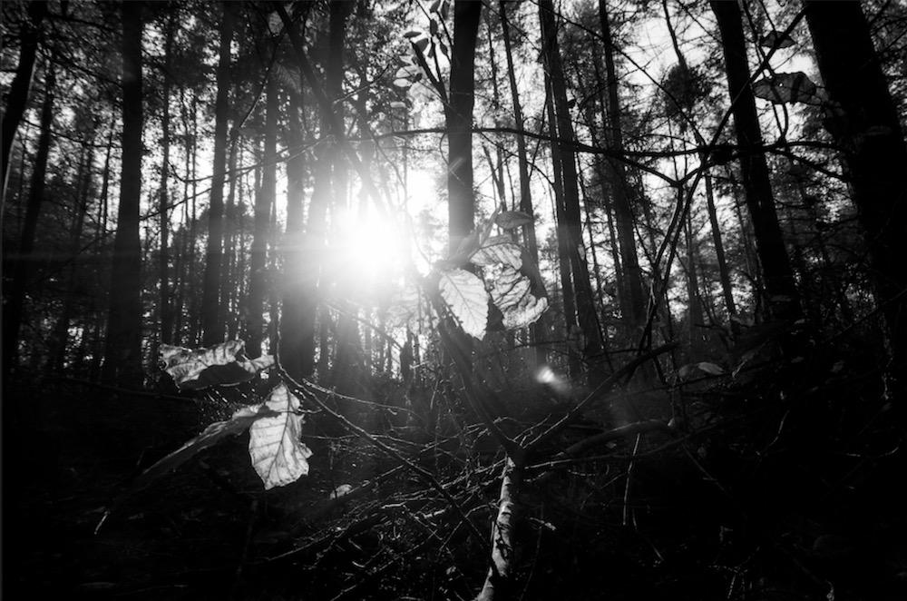 magicwoods_015.jpg
