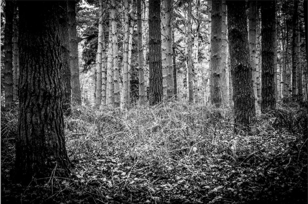magicwoods_016.jpg