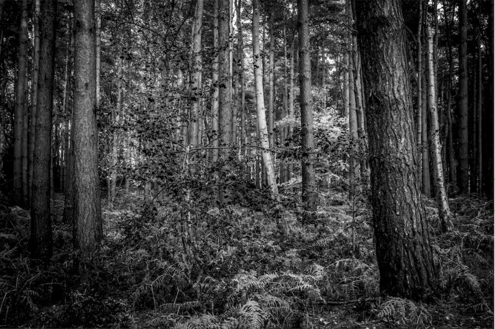 magicwoods_017.jpg