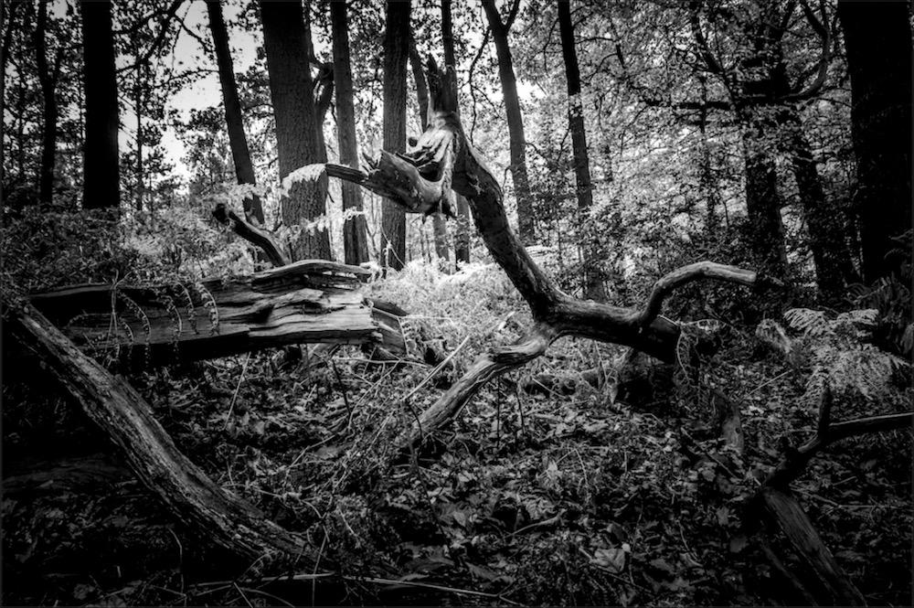 magicwoods_018.jpg