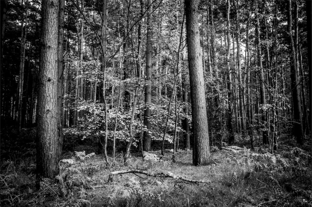 magicwoods_019.jpg