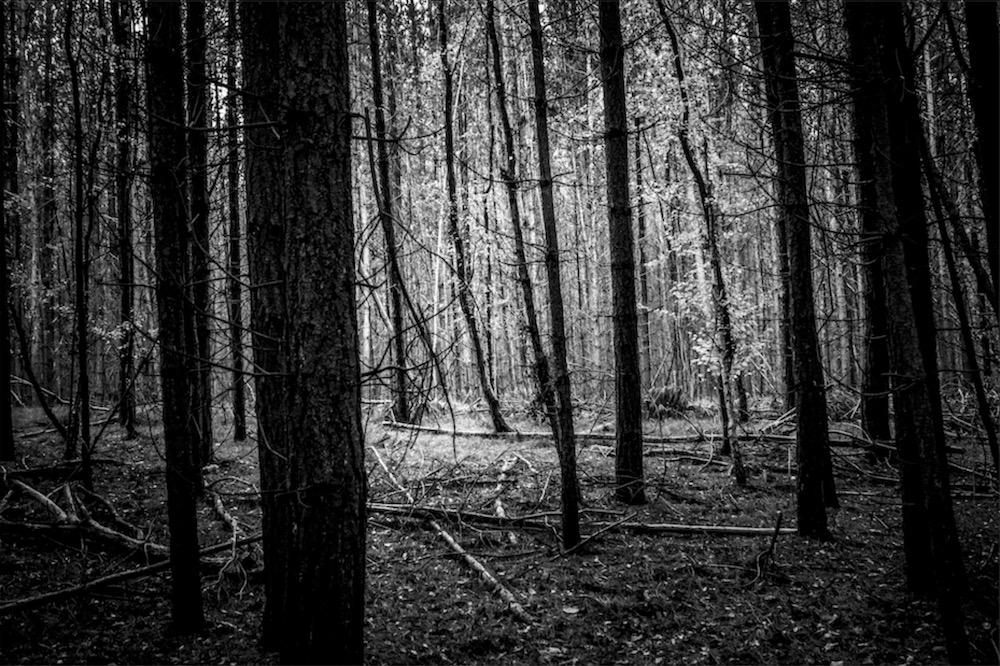 magicwoods_020.jpg