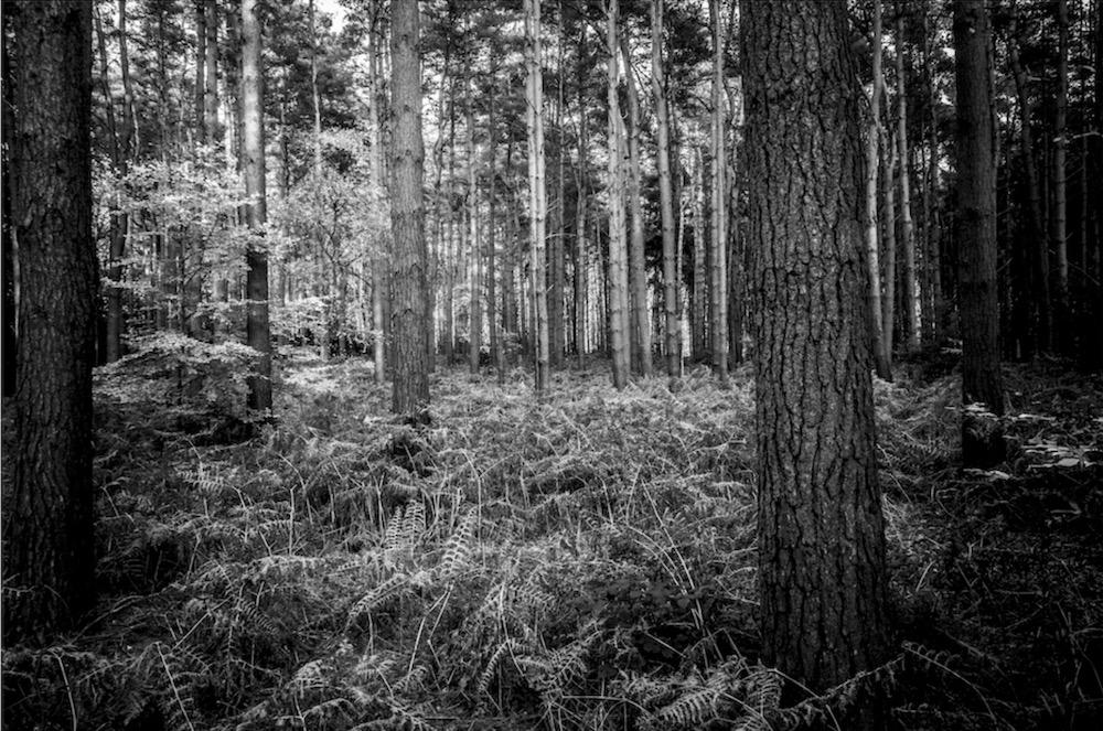 magicwoods_021.jpg
