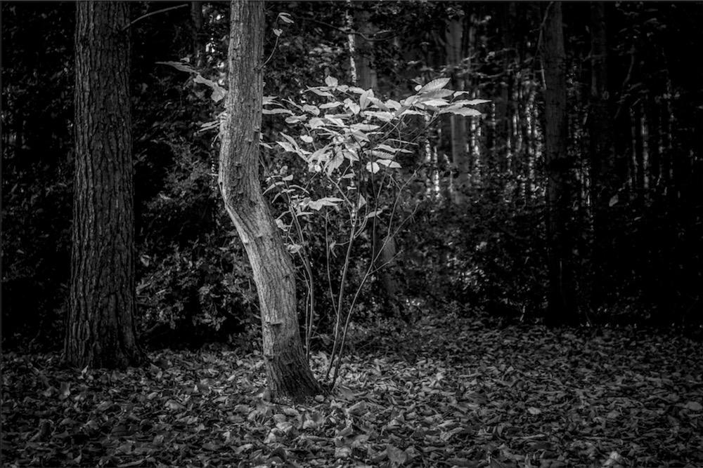 magicwoods_022.jpg