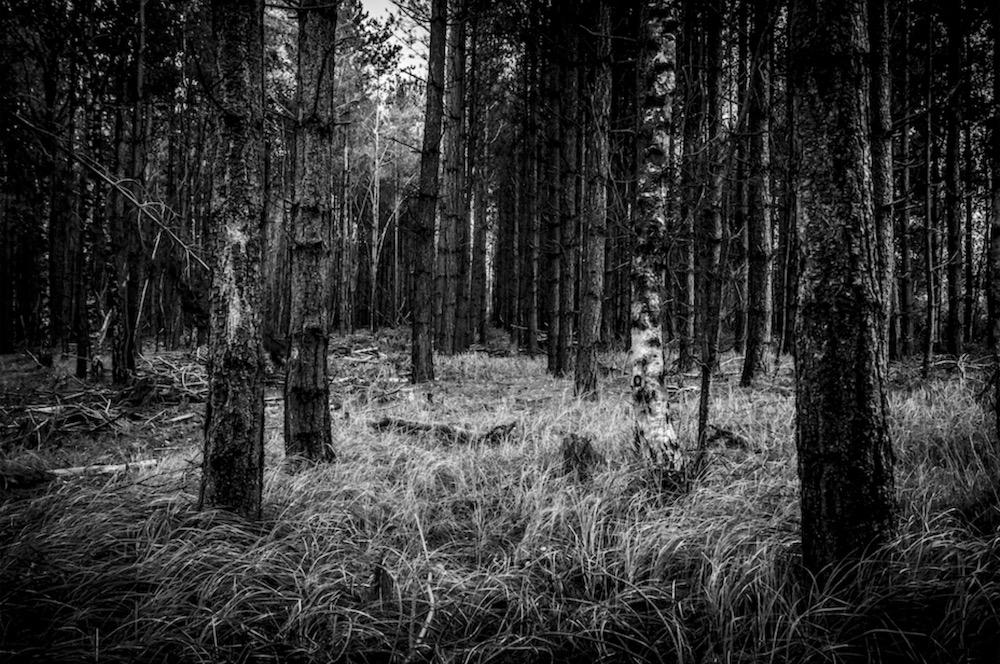 magicwoods_023.jpg