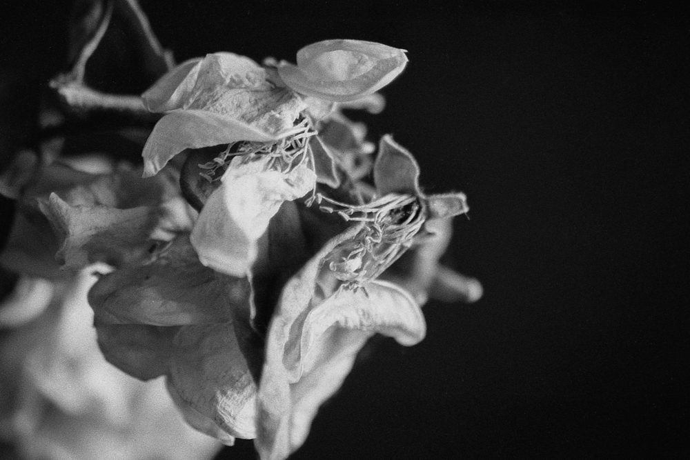 DeadFlowers_005.jpg