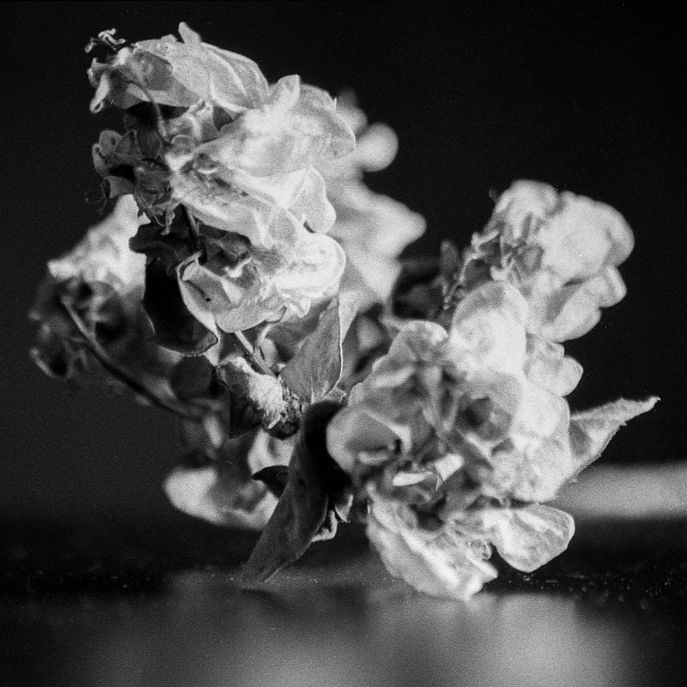 DeadFlowers_011.jpg