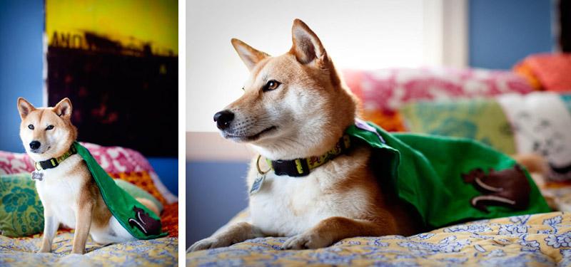 shiba inu oakland dog puppy costume